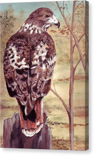Watch Hawk Canvas Print by Debra Sandstrom