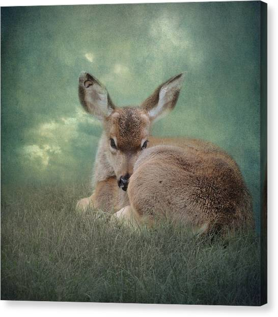 Watchful Eye Canvas Print