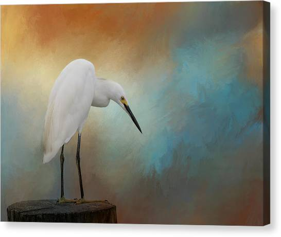Egrets Canvas Print - Watching by Kim Hojnacki