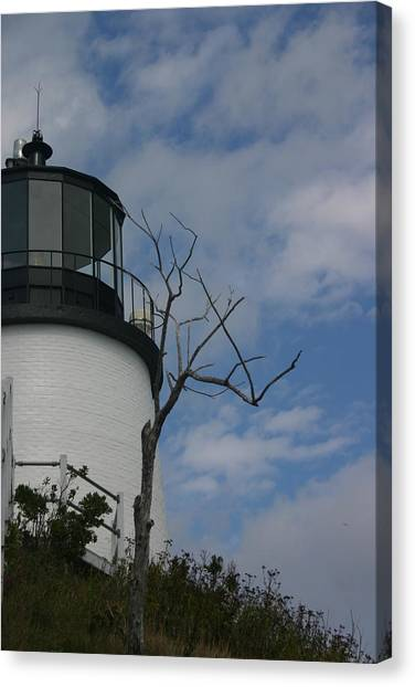 Watching Over Tree Canvas Print by Dennis Curry