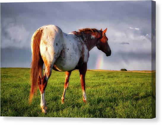 Watching The Rainbow Canvas Print