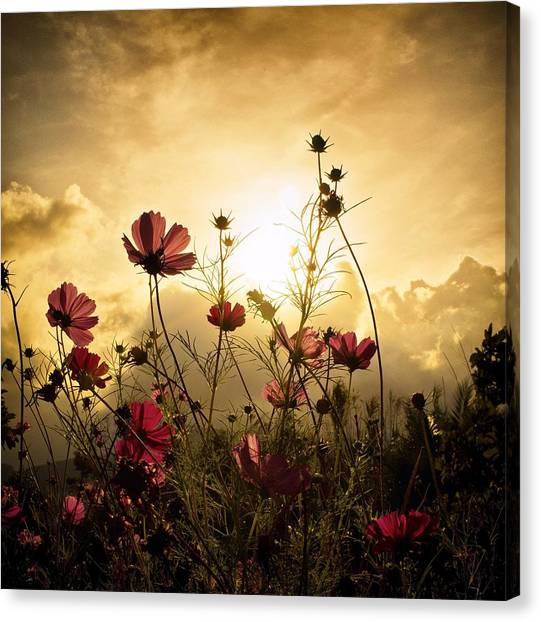 Grass Canvas Print - Watching The Sun by Christian Marcel
