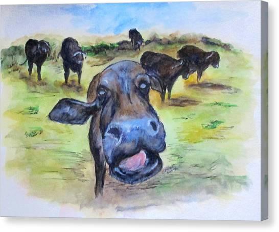 Water Buffalo Kiss Canvas Print
