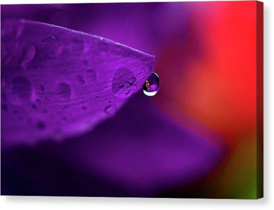 Water Drop Reflections With Purple II Canvas Print