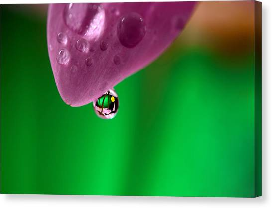 Water Drop Reflections With Purple Canvas Print