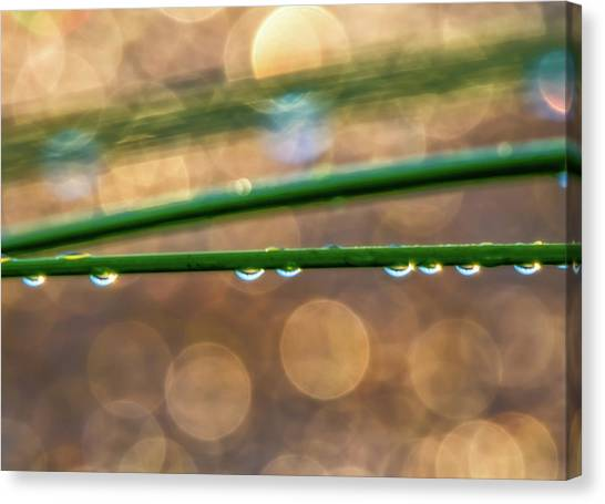 Contra Canvas Print - Water Drops At Sunrise by Marc Crumpler