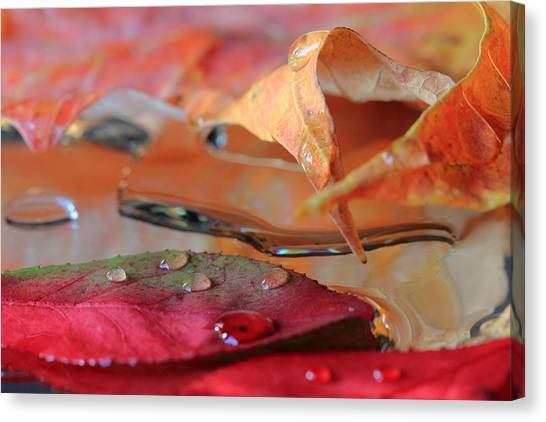 Water Drops On Autumn Leaves Canvas Print