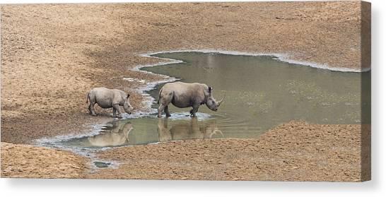 Rhinos Canvas Print - Water For Rhinos by Stephen Stookey