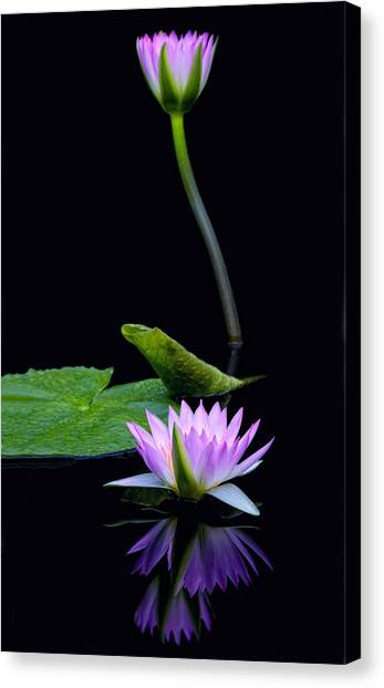 Water Lilies And Reflections Canvas Print by Margaret Barry
