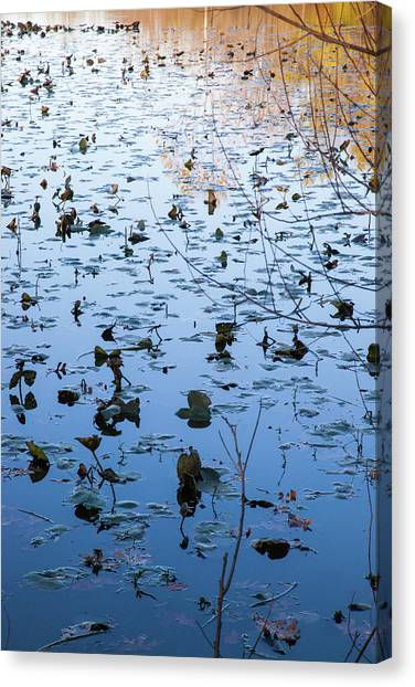 Water Lilies Autumn Song Canvas Print