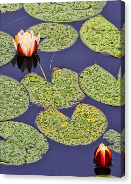 Canvas Print - Water Lillies At Clear Lake by Peg Runyan