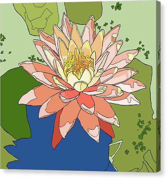 Water Lily And Duck Weed Canvas Print