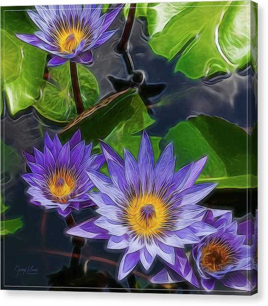 Water Lily Canvas Print by George Moore