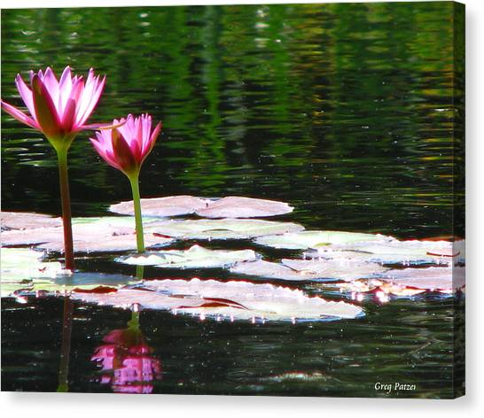 Water Lily Canvas Print by Greg Patzer