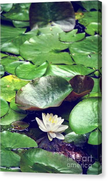 Water Lily II Canvas Print by HD Connelly