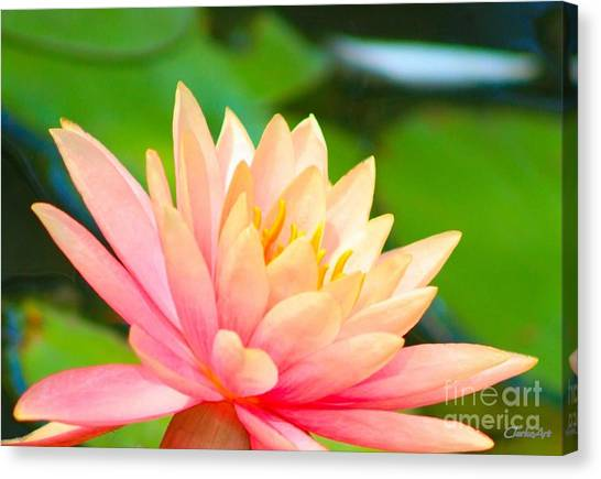 Water Lily In Pond Canvas Print