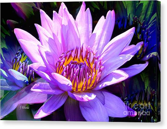Water Lily In Purple Canvas Print