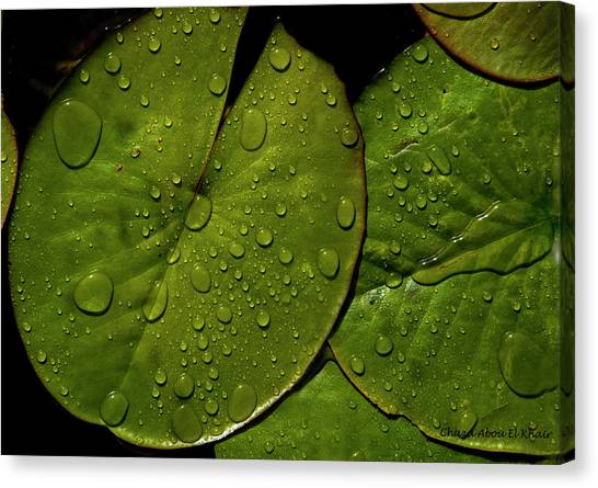 Water Lily Leaf Canvas Print by Chaza Abou El Khair