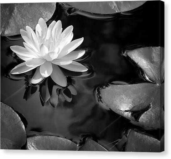 Canvas Print - Water Lily by Peg Runyan