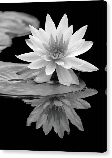Water Lily Reflections I Canvas Print