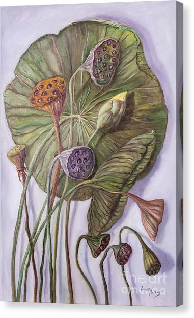 Water Lily Seed Pods Framed By A Leaf Canvas Print