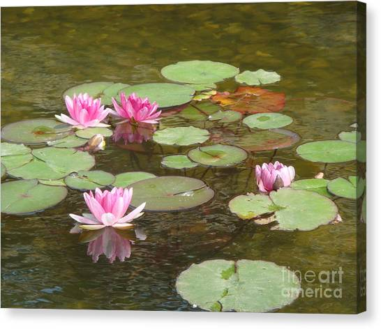 Water Lily Canvas Print by Tierong Fu