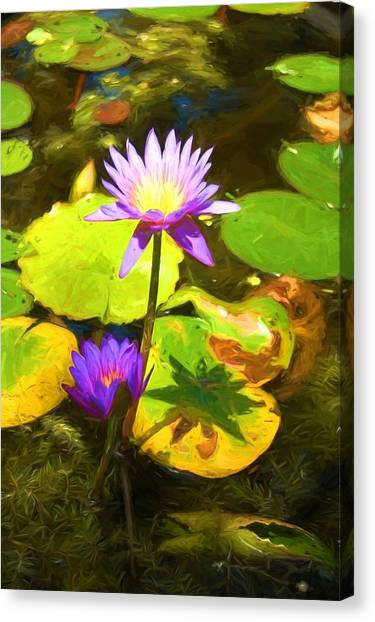 Water Lily Van Goh Canvas Print