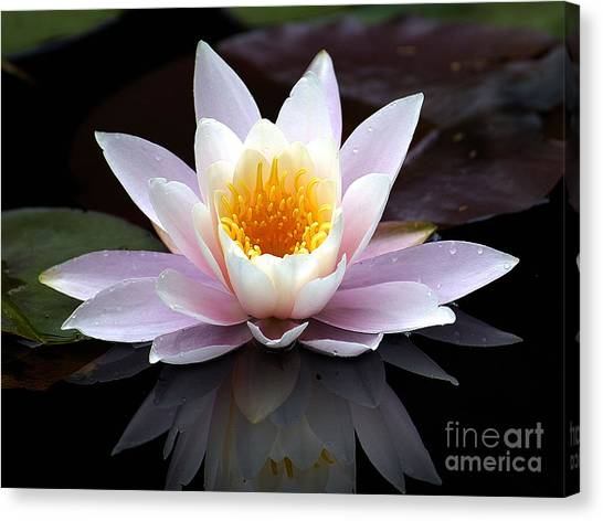 Water Lily With Reflection  Canvas Print by Neil Doren
