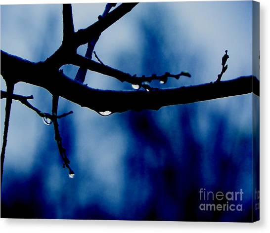 Water On Branch Canvas Print