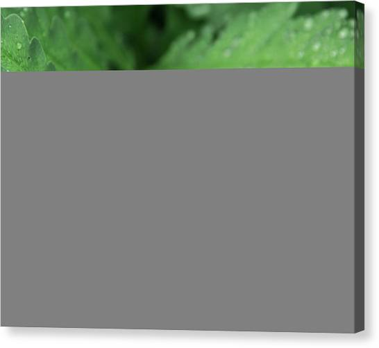 Water On The Fronds Canvas Print