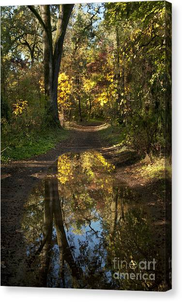 Water On The Trail Canvas Print