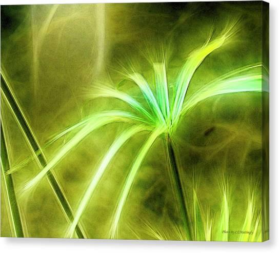 Water Plants Canvas Print