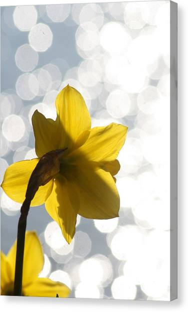 Water Reflected Daffodil Canvas Print by Karla DeCamp