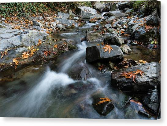 Water Stream Flowing In The River In Autumn Canvas Print