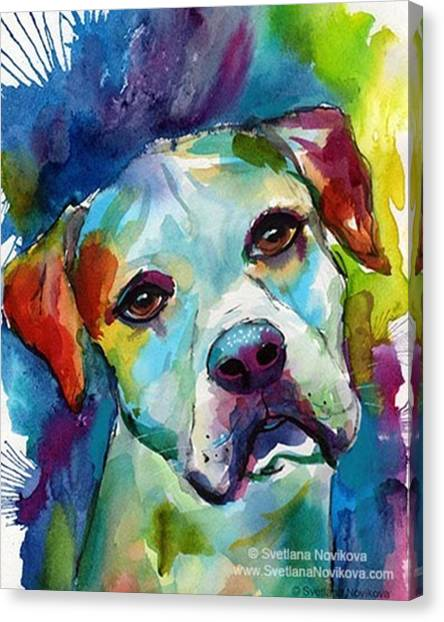 Watercolor Canvas Print - Watercolor American Bulldog Painting By by Svetlana Novikova