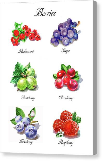 Raspberries Canvas Print - Watercolor Berries Illustration Collection I by Irina Sztukowski