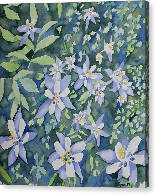 Watercolor - Blue Columbine Wildflowers Canvas Print