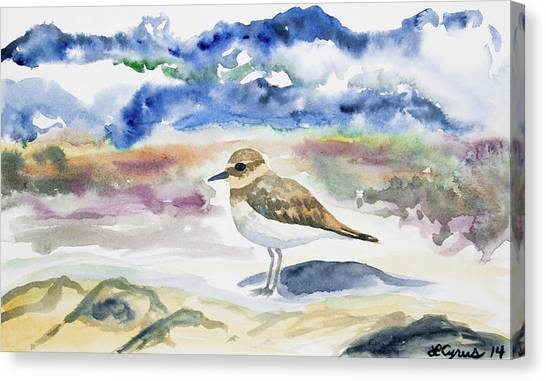 Watercolor - Double-banded Plover On The Beach Canvas Print