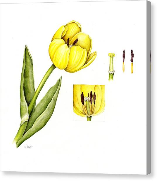 Watercolor Flower Yellow Tulip Canvas Print