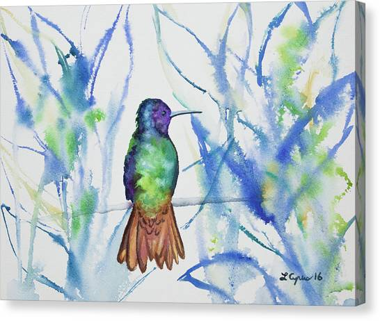 Watercolor - Golden-tailed Sapphire Canvas Print