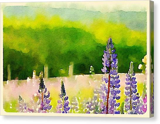 Canvas Print - Watercolor Lupines by Modern Art
