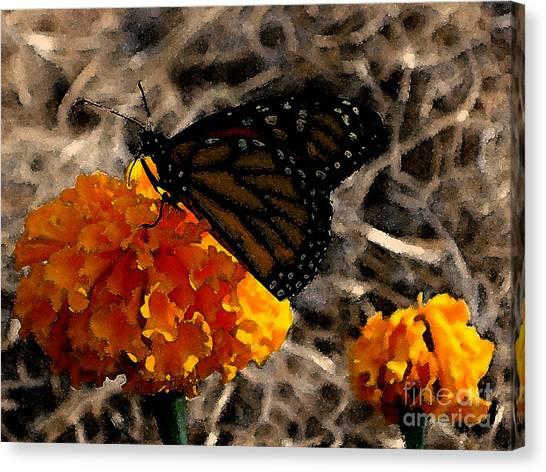 Watercolor Monarch Canvas Print by PJ  Cloud