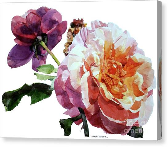 Watercolor Of Two Roses In Pink And Violet On One Stem That  I Dedicate To Jacques Brel Canvas Print