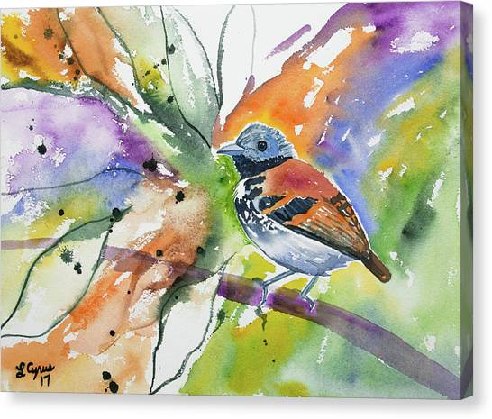 Watercolor - Spotted Antbird Canvas Print