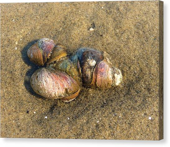 Watercolored Seashells Canvas Print by Margie Avellino