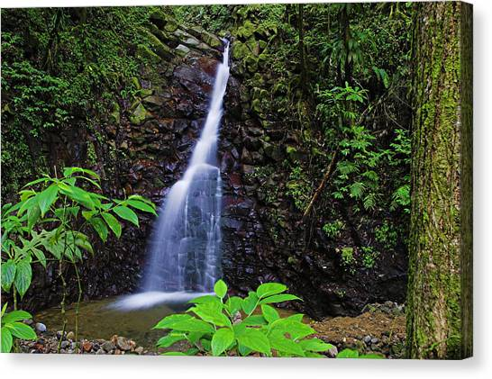 Waterfall-1-st Lucia Canvas Print