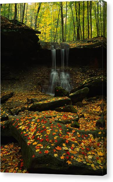Ohio Valley Canvas Print - Waterfall In A Forest, Blue Hen Falls by Panoramic Images