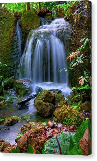 Tropical Rainforests Canvas Print - Waterfall by Patti Sullivan Schmidt
