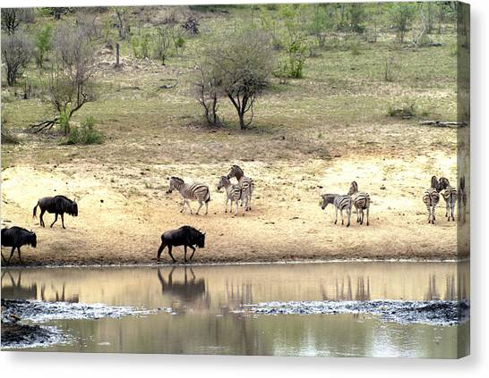 Watering Hole Canvas Print by Charles  Ridgway