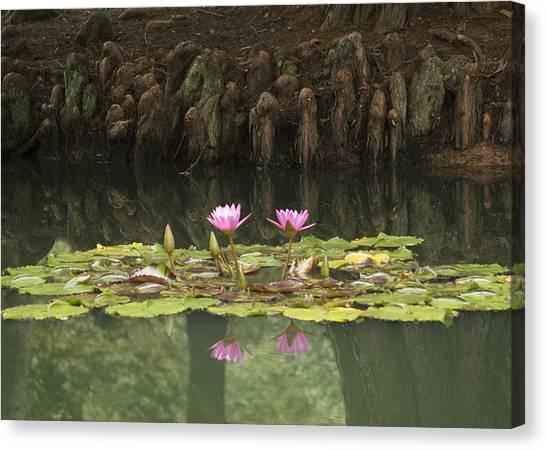Waterlilies And Cyprus Knees Canvas Print